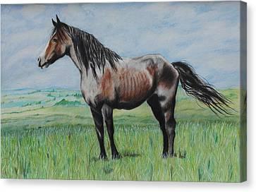 Snowy The Nokota Stallion Canvas Print by Jeanne Fischer