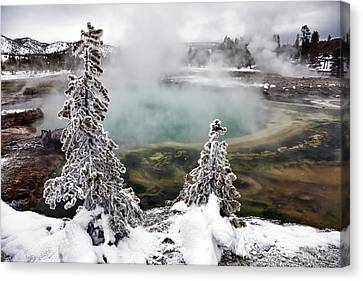 Snowy Yellowstone Canvas Print by Jason Maehl