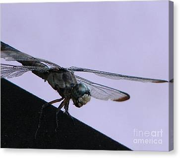 So Many Bugs So Little Time Canvas Print by Priscilla Richardson
