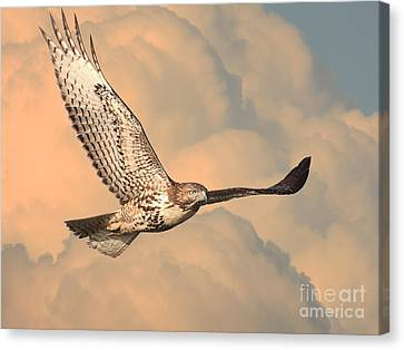Soaring Hawk Canvas Print by Wingsdomain Art and Photography