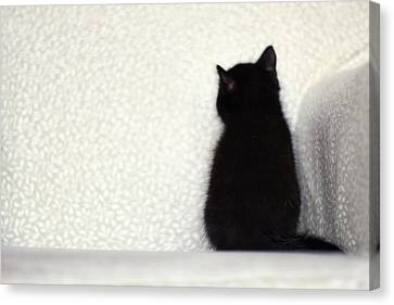 Sitting Kitty Canvas Print by Amy Tyler