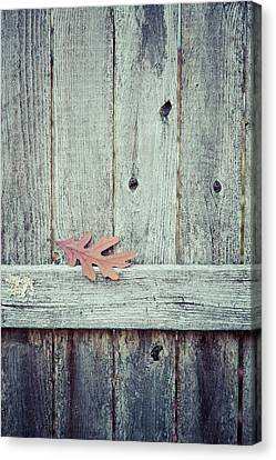 Solitary Leaf On Fence Canvas Print by Erin Cadigan