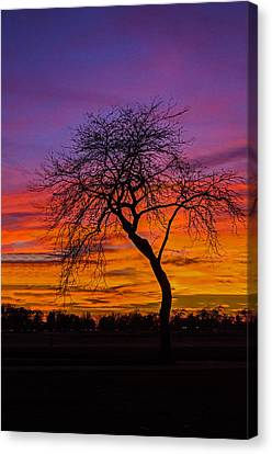 Solitary Canvas Print by Tom Clark
