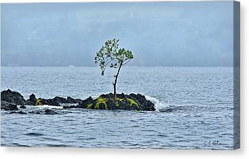 Solitude In Hilo Bay Canvas Print by Christopher Holmes