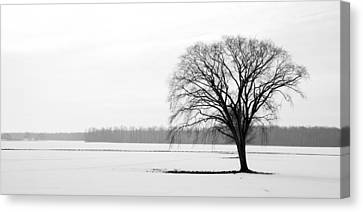 Solitude Canvas Print by Levin Rodriguez