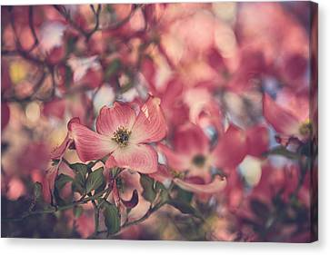 Some Souls Just Shine Canvas Print by Laurie Search