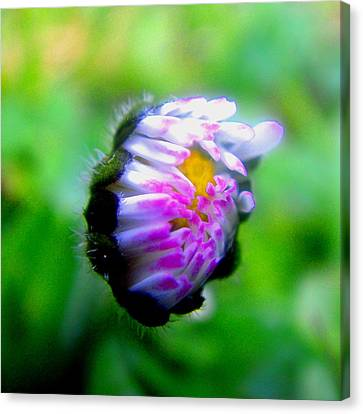 Flowers Canvas Print featuring the photograph Soon by Roberto Alamino