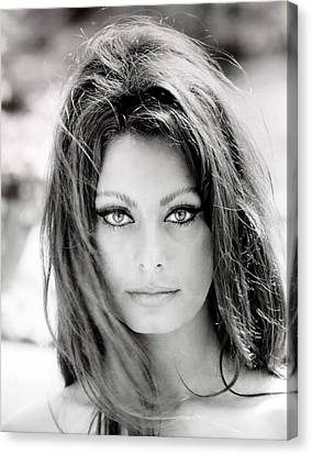 Sophia Loren Canvas Print by Nomad Art