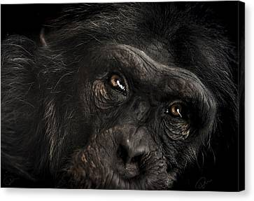 Sorrow Canvas Print by Paul Neville