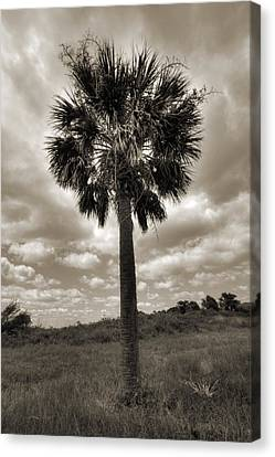 South Carolina Palmetto Palm Tree Canvas Print by Dustin K Ryan