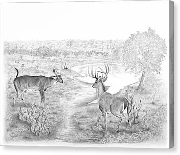 South Texas Stand Off Canvas Print by Steve Maynard