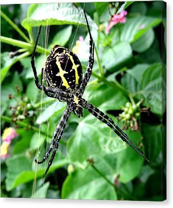 Spider Underbelly  Canvas Print by SHWETA Sambyal