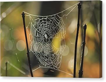 Spider's Creation Canvas Print by Karol Livote