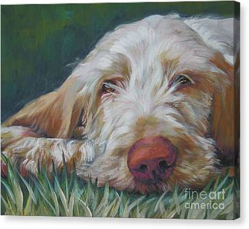 Spinone Italiano Orange Canvas Print by Lee Ann Shepard