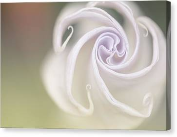 Spiral Canvas Print by Nailia Schwarz