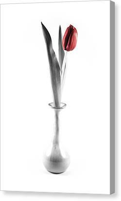 Splash Of Red Canvas Print by Greg Thiemeyer