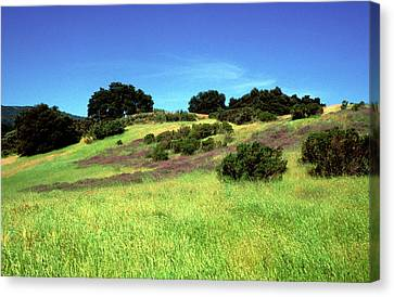 Splendor In The Grass Canvas Print by Kathy Yates