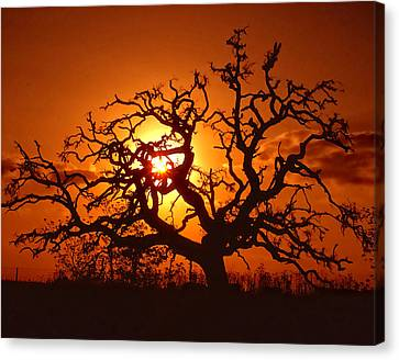 Spooky Tree Canvas Print by Stephen Anderson