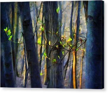 Spring Awakening In The Forest Canvas Print by Menega Sabidussi
