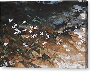 Spring Beauties Canvas Print by Kurt Plinke
