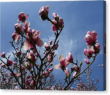 Spring Blooms 2010 Canvas Print by Anna Villarreal Garbis