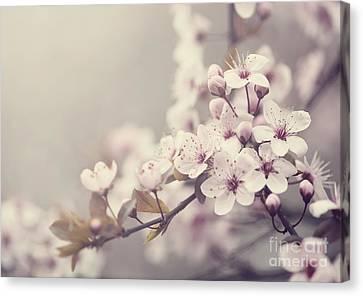 Spring Blossom Canvas Print by Jelena Jovanovic