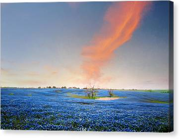 Spring Bluebonnets In Texas Canvas Print by David and Carol Kelly