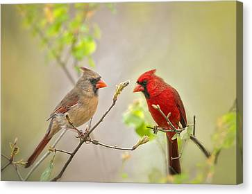 Spring Cardinals Canvas Print by Bonnie Barry