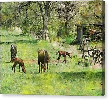 Spring Colts Canvas Print by John Robert Beck