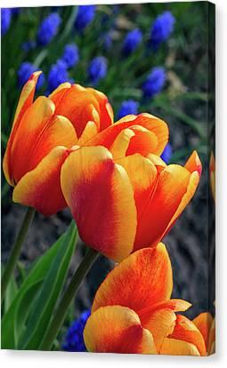 Spring Garden - Act One 3 Canvas Print by Steve Harrington