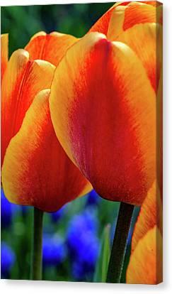 Spring Garden - Act One 4 Canvas Print by Steve Harrington