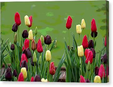 Spring Garden View II Canvas Print by Suzanne Gaff