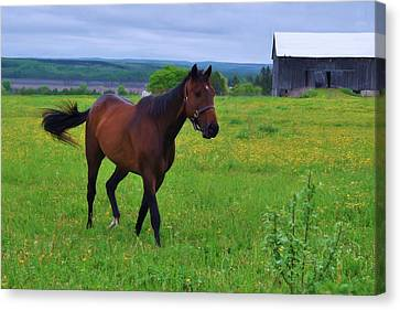 Spring In The Pasture Canvas Print by Bill Willemsen