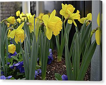 Spring In Yellow Canvas Print by Larry Bishop