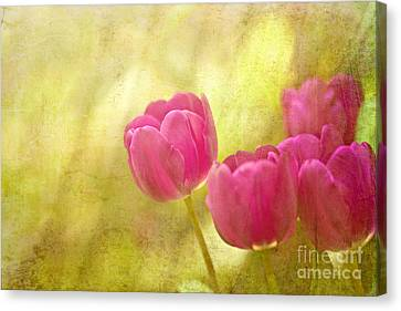 Spring Is In The Air Canvas Print by Beve Brown-Clark Photography