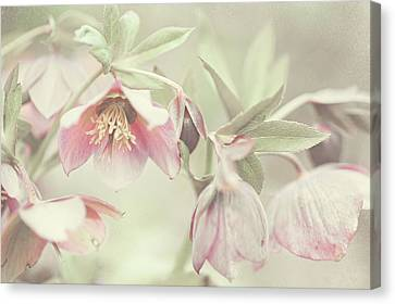 Spring Pastels Canvas Print by Jenny Rainbow