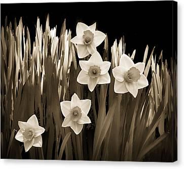 Spring - Sepia Canvas Print by Nikolyn McDonald