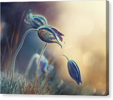 Spring Sunset Canvas Print by Magda Bognar