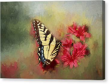 Spring Swallowtail Canvas Print by Darren Fisher