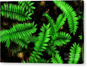 Spring Time Under The Canopy Canvas Print by Michael Eingle