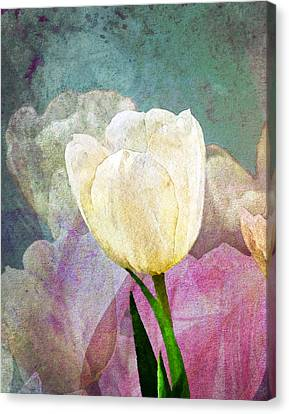 Spring Tulips Canvas Print by Moon Stumpp