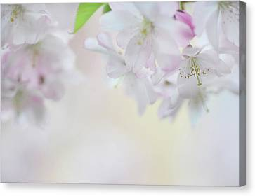 Spring Watercolor Canvas Print by Jenny Rainbow