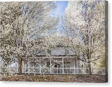 Spring Whites Canvas Print by Debra and Dave Vanderlaan