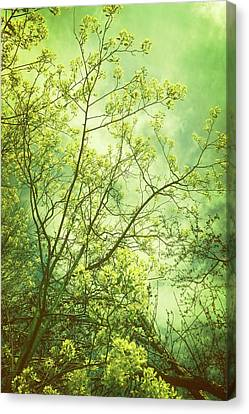 Spring - Yellow Canvas Print by Michelle Calkins