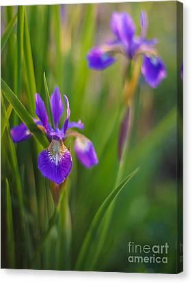 Springs Irises Beauty Canvas Print by Mike Reid