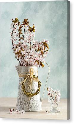 Springtime Blossom Canvas Print by Amanda And Christopher Elwell