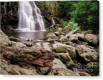Spruce Falls Canvas Print by Todd Bielby