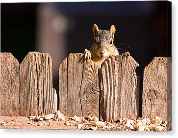 Squirrel On The Fence Canvas Print by James BO  Insogna