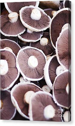 Stacked Mushrooms Canvas Print by Jorgo Photography - Wall Art Gallery