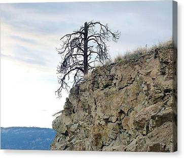 Stalwart Pine Tree Canvas Print by Will Borden